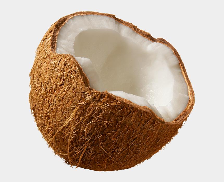 coconut clipart, Cartoons - Coconut Clipart Tumblr Transparent - Coconut Png
