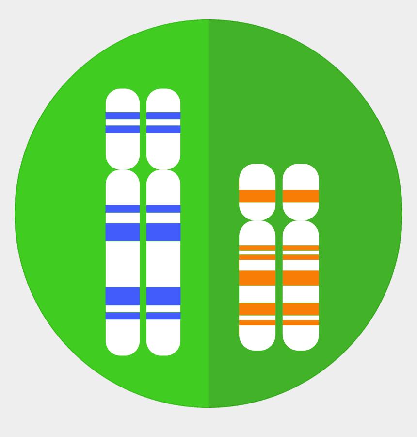 genealogy clip art graphics, Cartoons - Chromosome Graphic