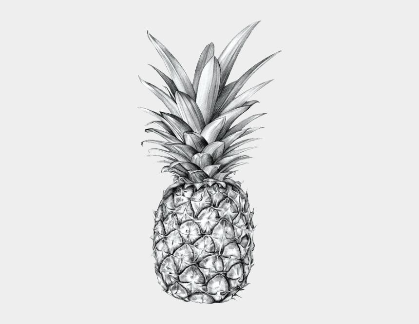 pineapple clip art, Cartoons - Drawing Of 3 Pineapple