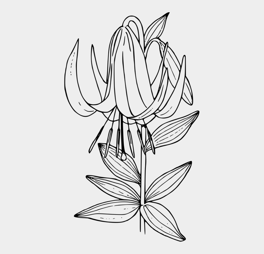 tulip clip art, Cartoons - Symmetry,monochrome Photography,petal - Line Art