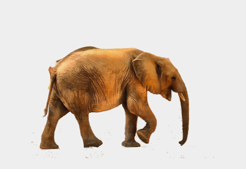 baby elephant clip art, Cartoons - Baby Animal Photo 05032016 Image 007 - High And Low Sounds Animals