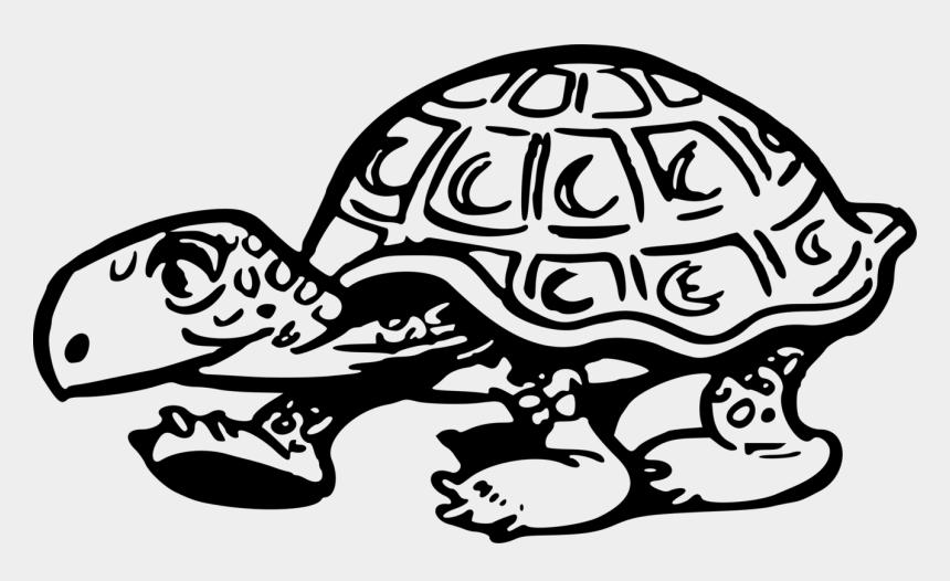 raccoon clip art, Cartoons - Turtle,art,monochrome Photography