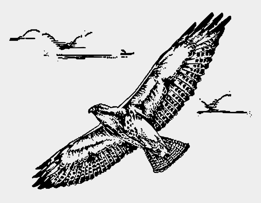 hawk clipart, Cartoons - Clipartblack Com Swainsion In Flight Bclipart Ⓒ - Hawk Flying Line Drawing