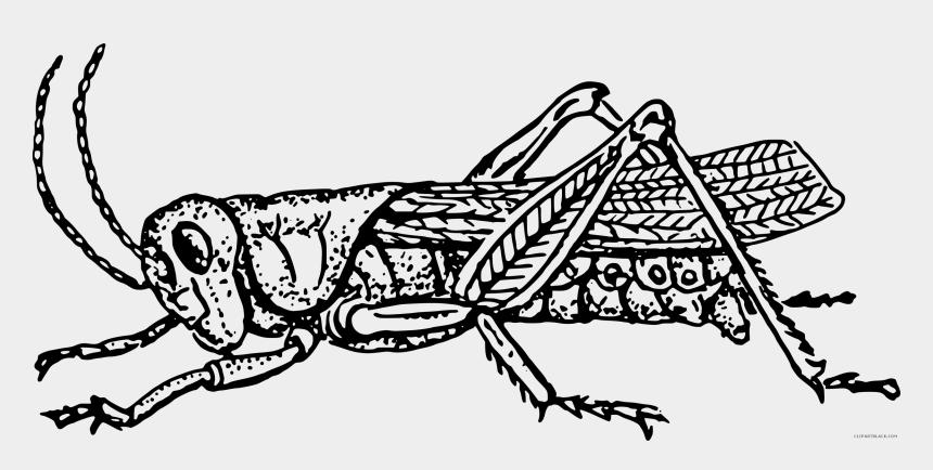 grasshopper clipart, Cartoons - How To Set Use Grass Hopper Clipart - Grasshopper Black And White