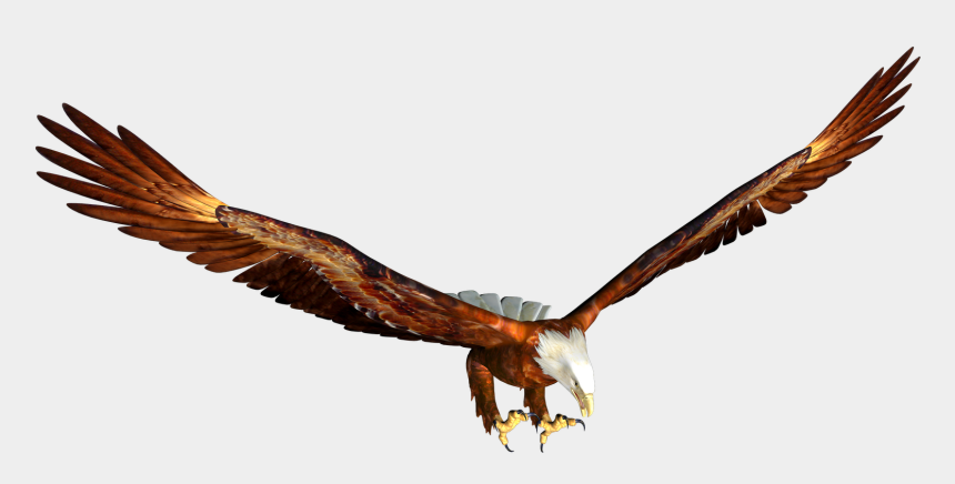 hawk clipart, Cartoons - Soaring Eagle - Clipart Best - Animated Flying Eagle Png