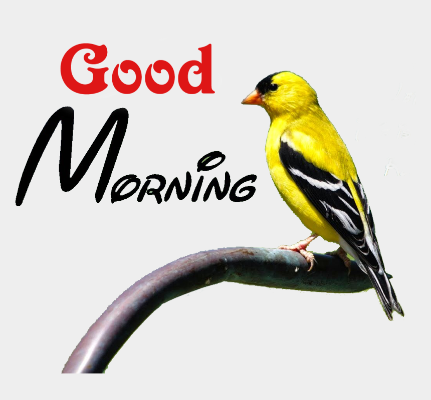 good morning clipart, Cartoons - Good Morning Png Transparent Images - Good Morning Heart Touching Quotes