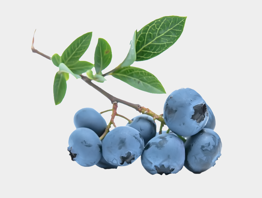 blueberry clipart, Cartoons - Blueberries Png - รูป ผล ไม้ สี ฟ้า