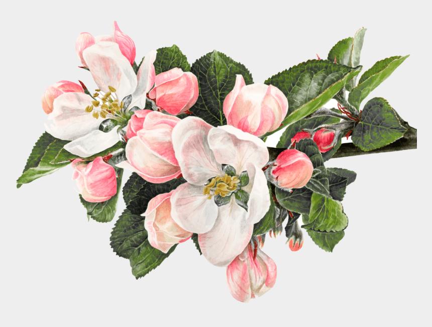 green apple clip art, Cartoons - Clip Art Royalty Free Stock Macbook Drawing Flower - Anna Mason Apple Blossom