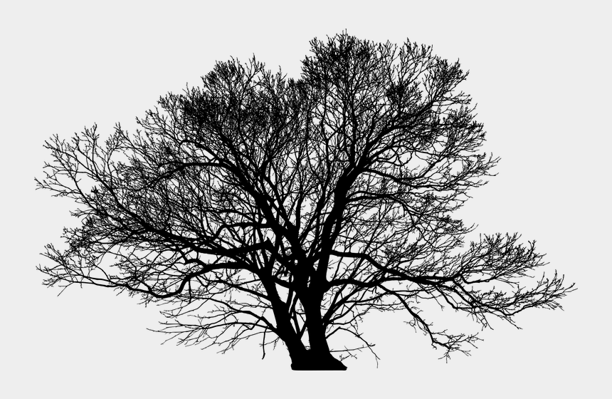 barren tree clip art, Cartoons - Winter Tree Silhouette Png