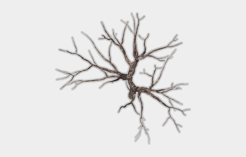 barren tree clip art, Cartoons - Winter Tree Top Png