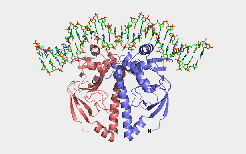 dna clipart, Cartoons - Dna Structure Clipart Protein Structure - Illustration