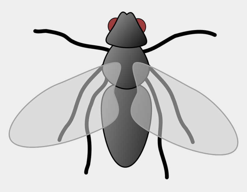 fly clipart, Cartoons - Fly Clipart Free - Clip Art Of Fly