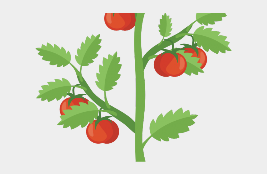 lake clipart, Cartoons - Bush Clipart Lake Plant - Transparent Tomato Plant Clipart