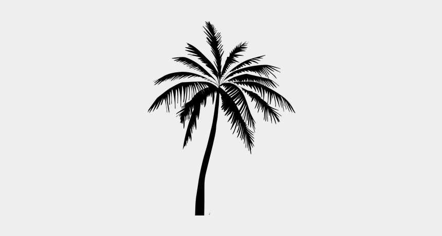 palm tree clip art black and white, Cartoons - ☡do Not Use Without Credits ☡ - Transparent Background Palm Tree Jpeg