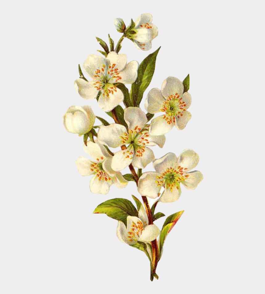 may flowers border clip art, Cartoons - Mayflower Clipart Colorful Flower - Transparent Background Vintage Flower Png