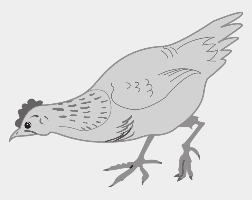 chicken outline clip art, Cartoons - Chicken Clip Art Hen Food Eating - Birds Chicken Line Art Png
