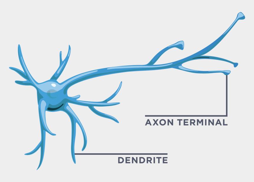 neuron clip art, Cartoons - Your Brain Interactive Build - Neuron Axon Terminal