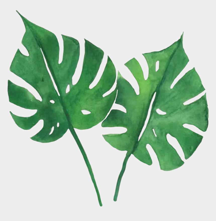 tropical leaves clip art, Cartoons - #green #tropical #leaves - Watercolor Tropical Leaves Png