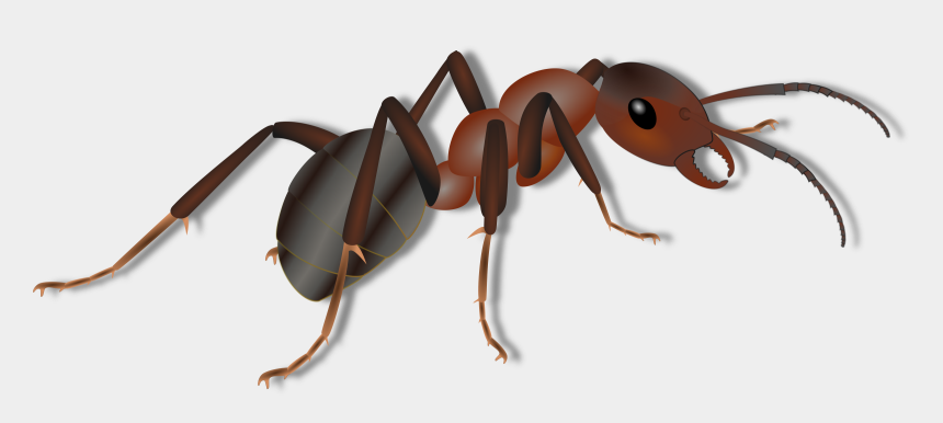ant clipart, Cartoons - Ant Clipart Png