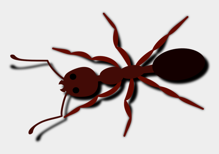 ant clipart, Cartoons - Ant Clipart Small Animal - Free Ant Clip Art
