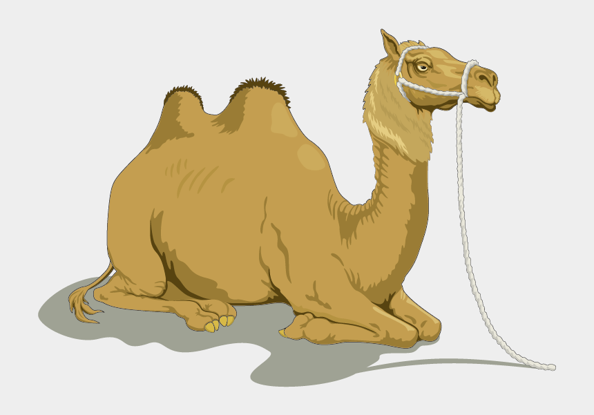 camel clipart, Cartoons - Camel Clipart Bactrian Camel - Camel And The Baby Story