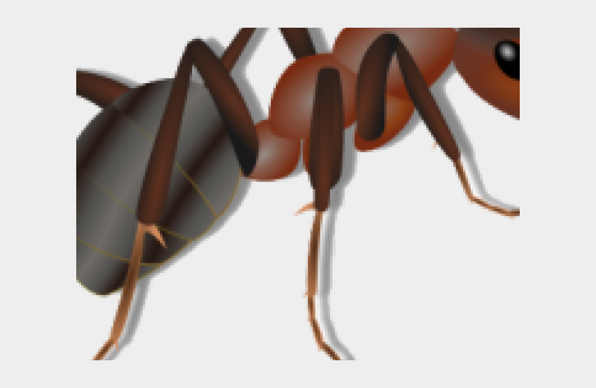 ant clipart, Cartoons - Ant Clipart Transparent Background - Ant Clip Art Png