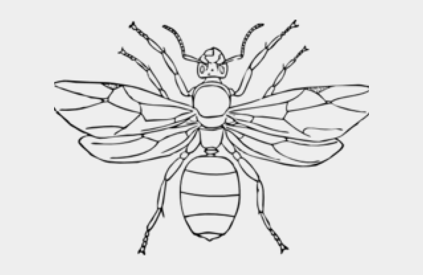 ant clipart, Cartoons - Drawn Ant Clipart Black - Draw A Queen Ant