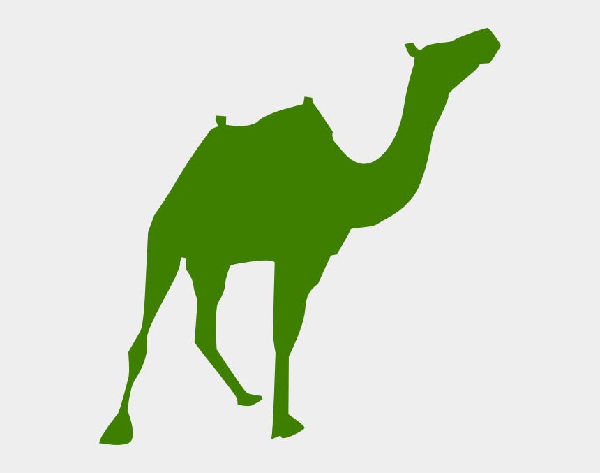 camel clipart, Cartoons - Pyramids Of Giza Vector