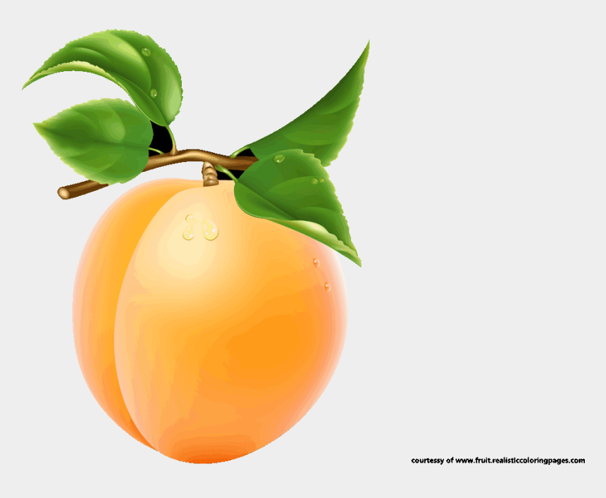 royalty free clipart, Cartoons - Apricot Royalty Free Clipart - Apricot Fruit Clipart
