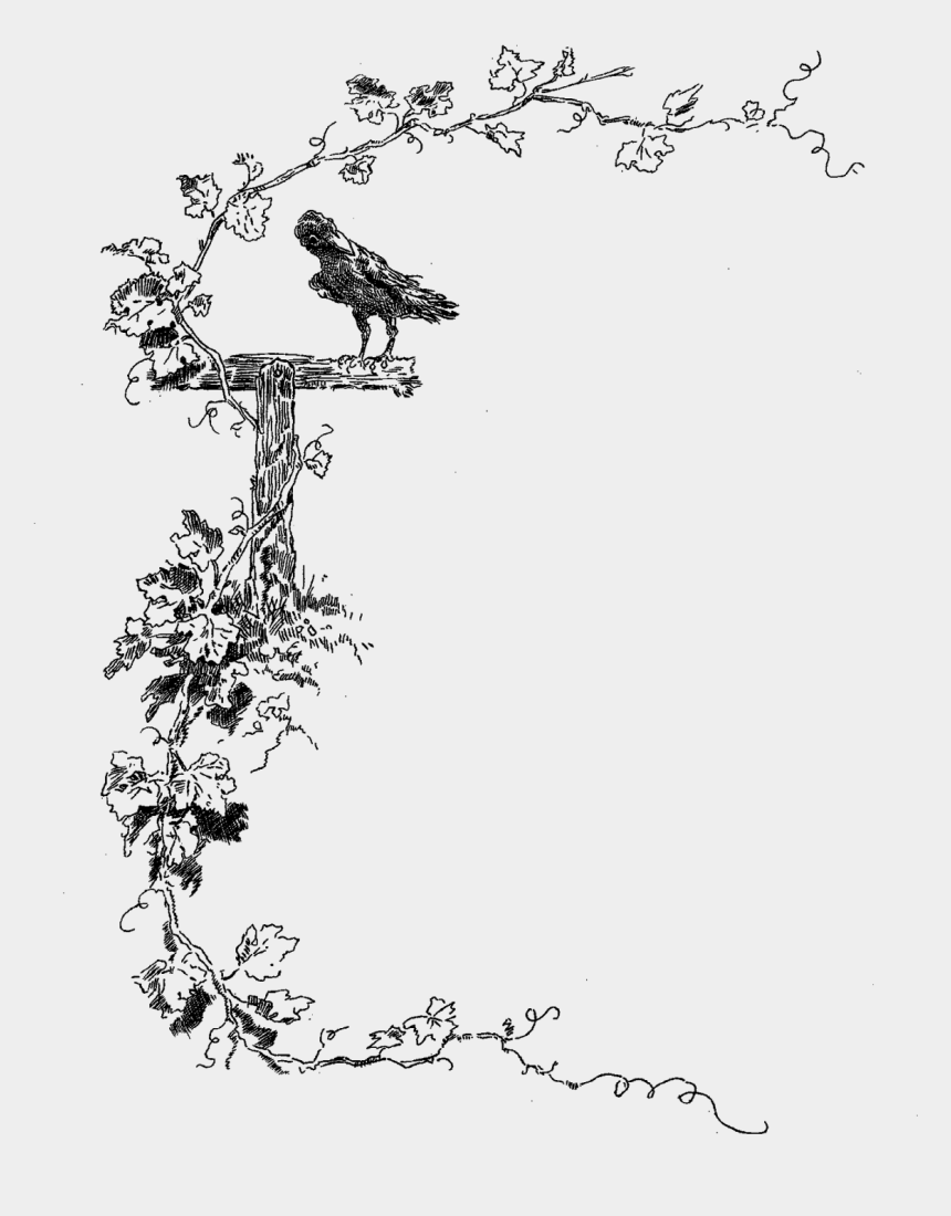 decorative frame clip art, Cartoons - Border Stock Image Botanical - Border Design Black And White Birds