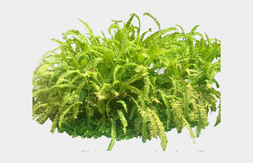 forest clipart, Cartoons - Forest Clipart Transparent Background - Plants Photoshop