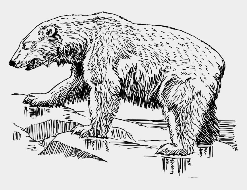 polar bear clipart, Cartoons - Grizzly Clipart Polar Bear - Polar Bear Line Art