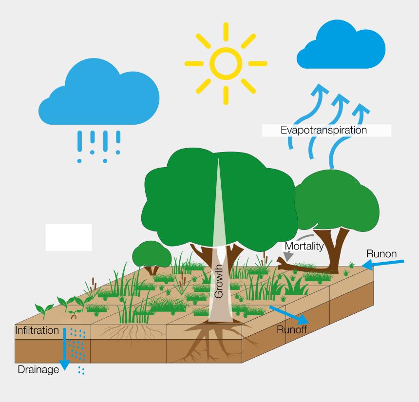watering plants clip art, Cartoons - Tree