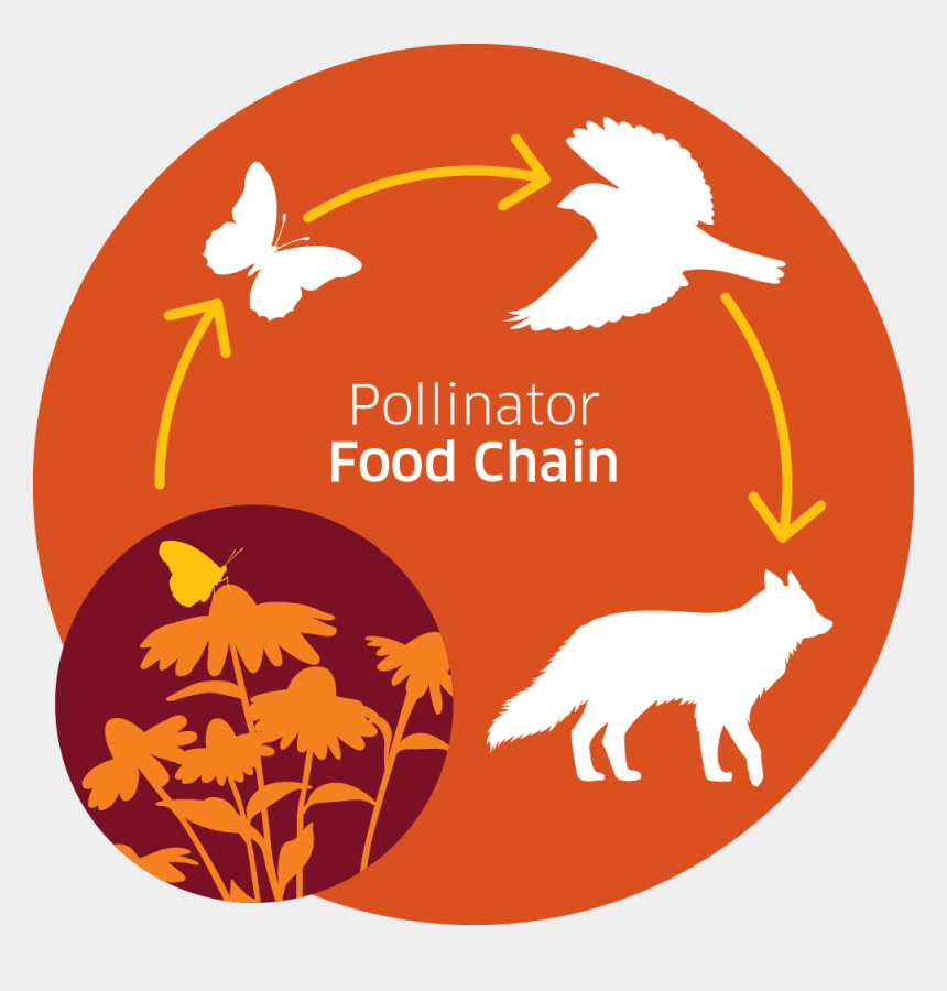 food chain clip art, Cartoons - Pollinator Food Chain Infographic The Food Source Hierarchy - Prohibido Fumar