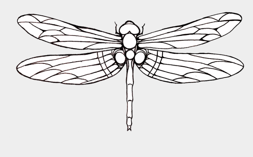 drawing clipart, Cartoons - Tattoo Dragonfly Drawing Clip Art - Outline Image Of Dragonfly