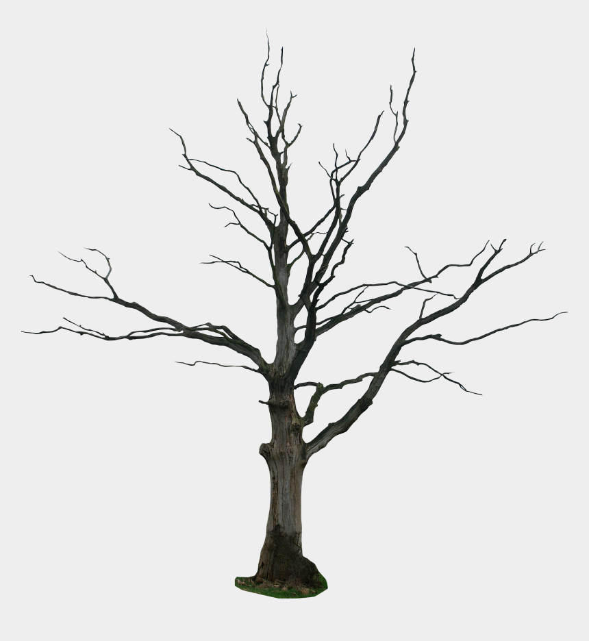 drawing clipart, Cartoons - Dead Tree Drawing Clipart - Dead Tree Png