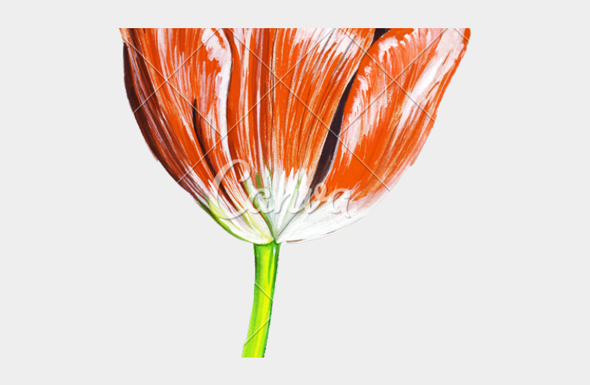 free clip art row of flowers, Cartoons - Realistic Tulip Flower Drawing