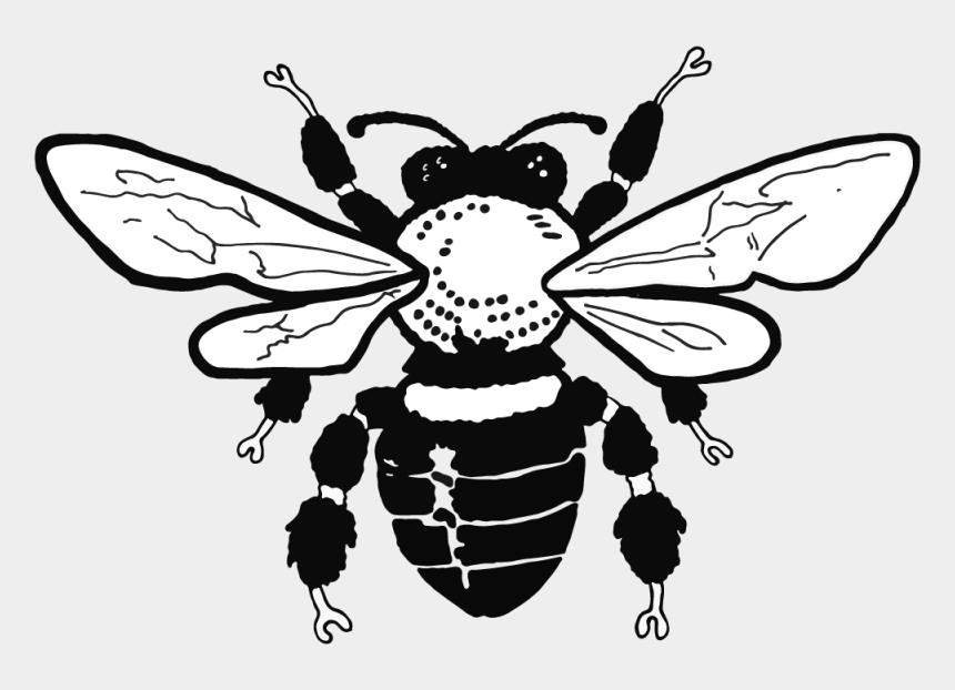 honey bee drawing clip art, Cartoons - Honey Bee Drawing Clip Art
