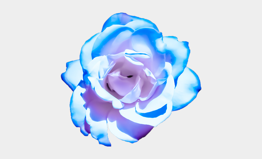 blue rose clip art, Cartoons - Clip Art Blue And Pink Roses
