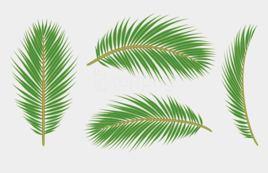palm frond clip art, Cartoons - Leaves Free Images - Leaf Palm Free Png