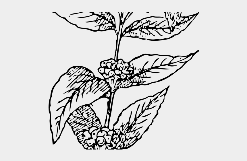 plant clipart, Cartoons - Coffee Plant Clipart Black And White - Coffee Plants Vector Png