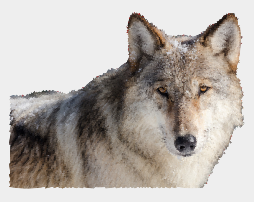 wolf clipart, Cartoons - Wolves Clipart Real Wolf - Wolf