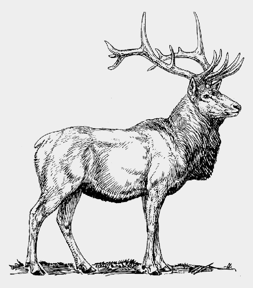 moose clipart, Cartoons - Deer Head Silhouette Png - Elk Clip Art