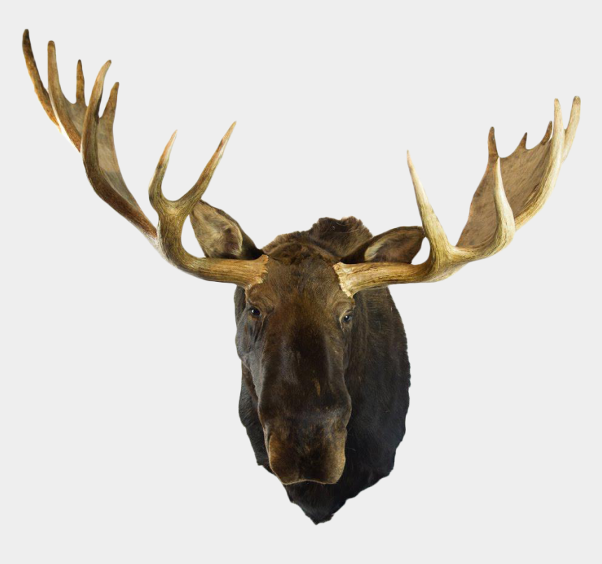 moose clipart, Cartoons - Moose Head Png - Mounted Moose Head Png