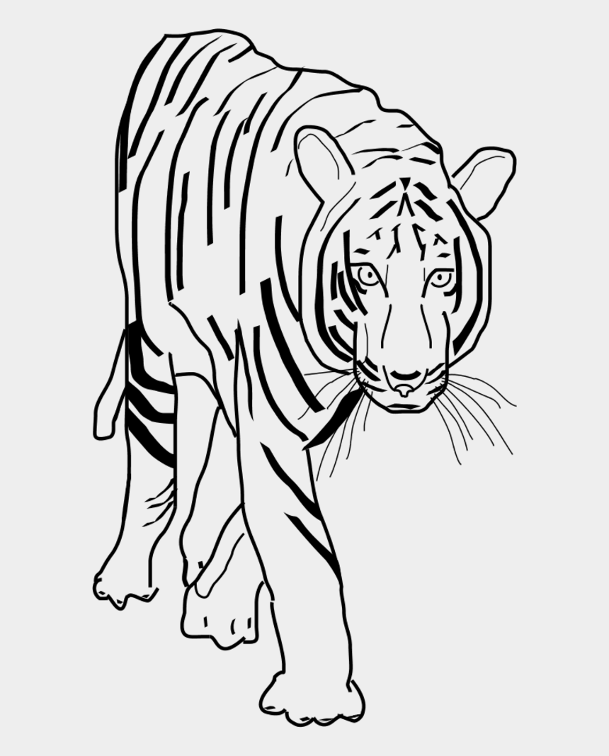 tiger clipart, Cartoons - Vector Clip Art - Tiger Clipart Black And White Png