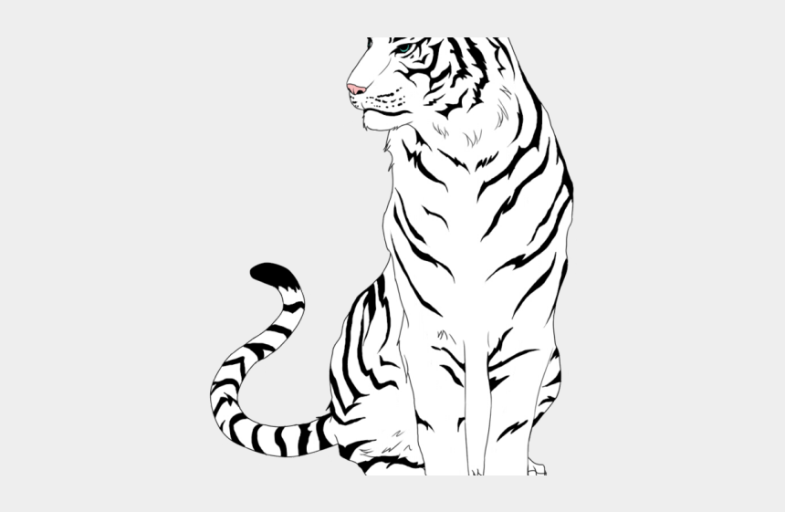tiger clipart, Cartoons - White Tiger Clipart Real Tiger - White Tiger Drawing Easy