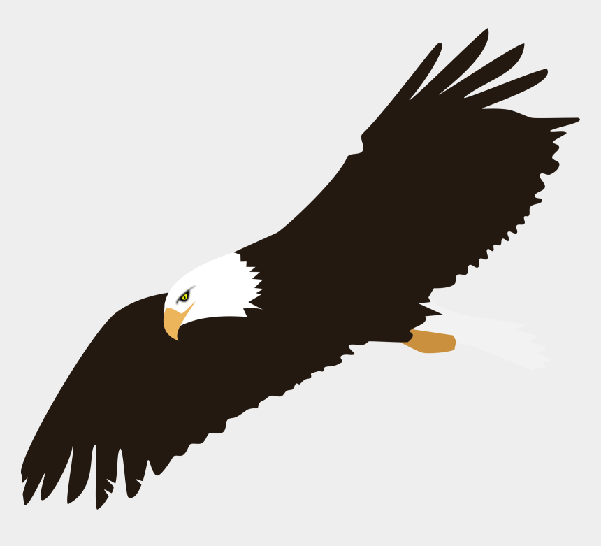 eagle clipart, Cartoons - Eagle Clipart No Background - Clipart Bald Eagle Png
