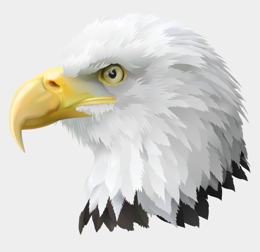 eagle clipart, Cartoons - American Head Transparent Png Clip Art Image Ⓒ - Bald Eagle Head Png