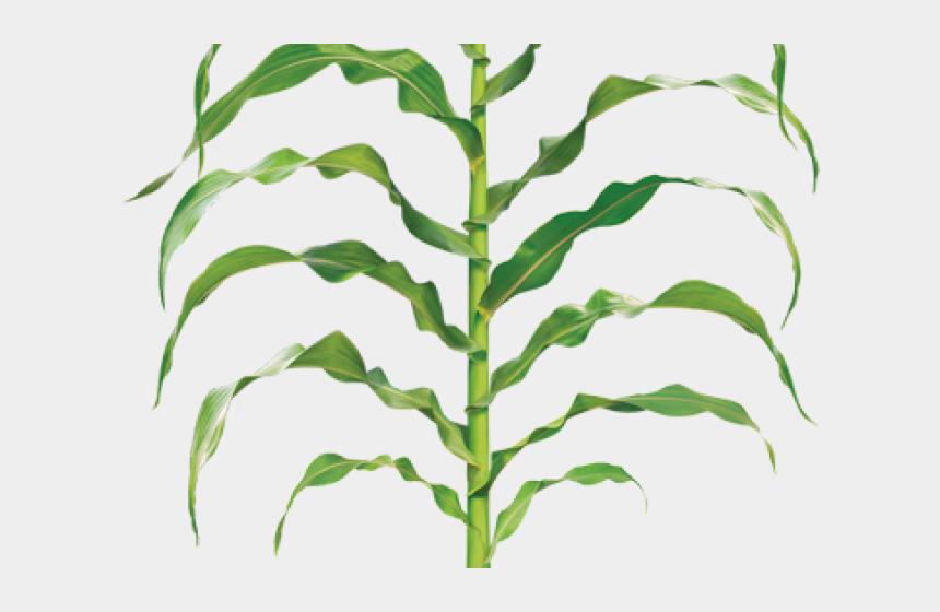 bean plant clip art, Cartoons - Grass