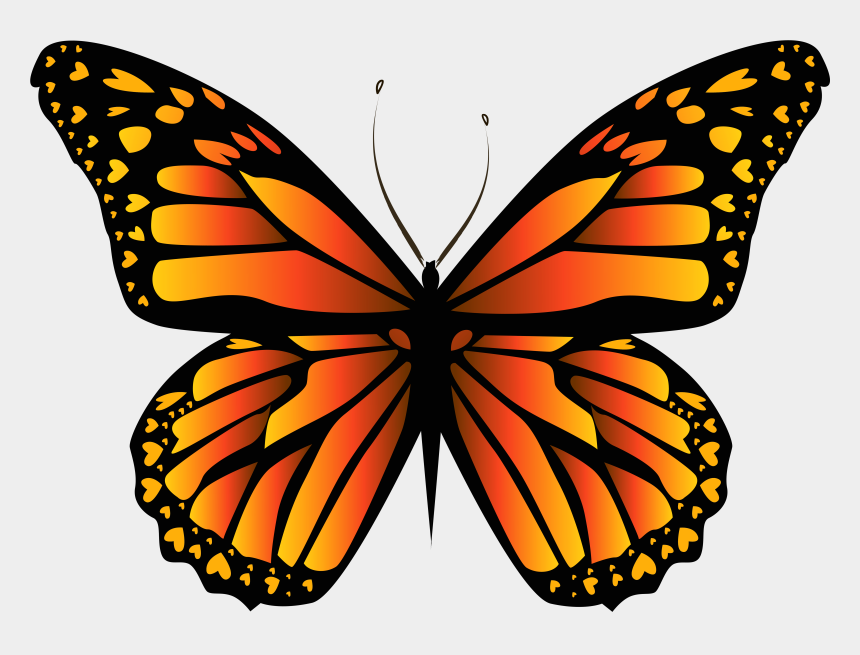 yellow butterfly clip art, Cartoons - Drawing Monarch Butterfly